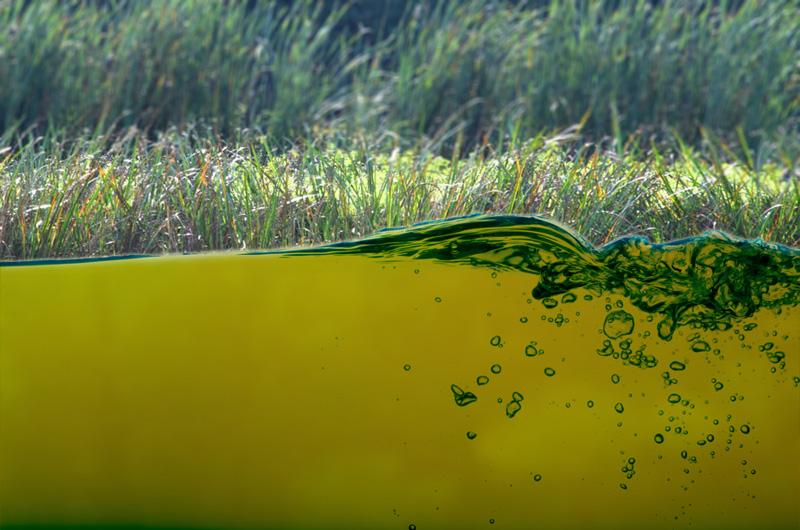 Unangenehme Gerüche, brackiges Wasser